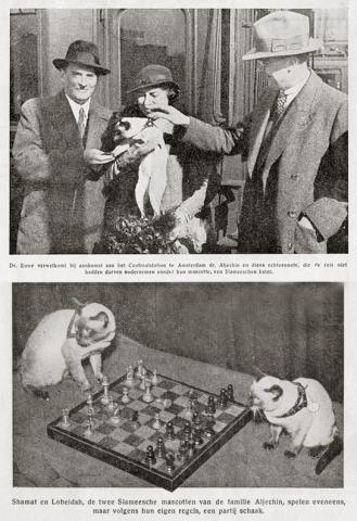 Алехин и его кот